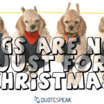 Dogs are not just for Christmas