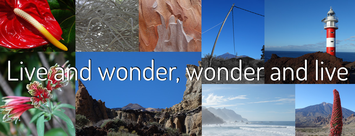 Live and wonder, wonder and live - Quotespeak moto