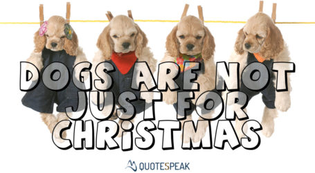 Sarcastic Brits About Christmas – Quotes from the British Isles